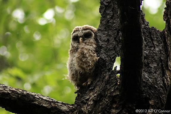 Join a Summer Owl Prowl Campout at the Ipswich River Wildlife Sanctuary