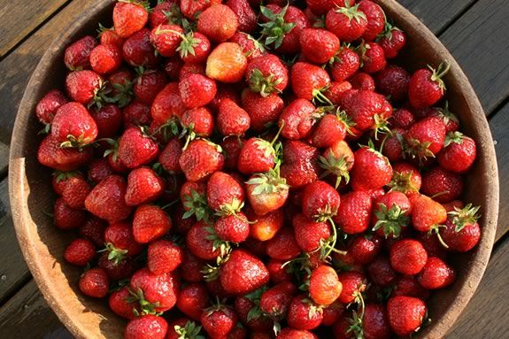 Come join the fun at Connors Farm in Danvers for their strawberry festival