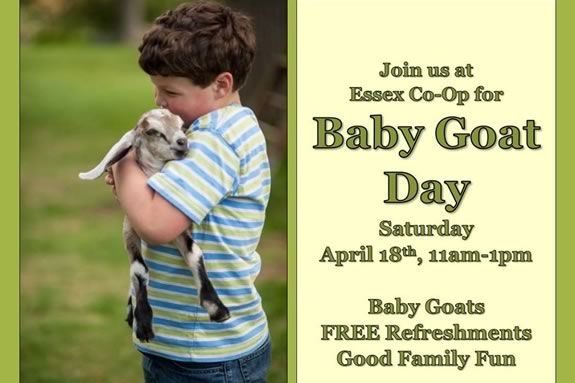 Essex County Co-op hosts baby goat day - come see some 8 week old goats!