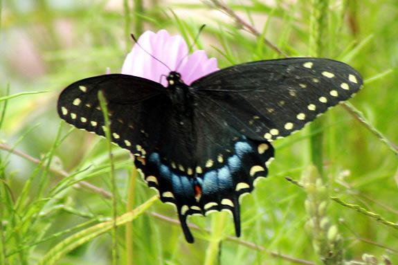Learn about butterflies, where they are going and what they eat at Joppa Flats.