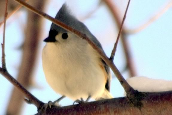 Build a Birdfeeder with your child that attracts birds to your yard this winter.