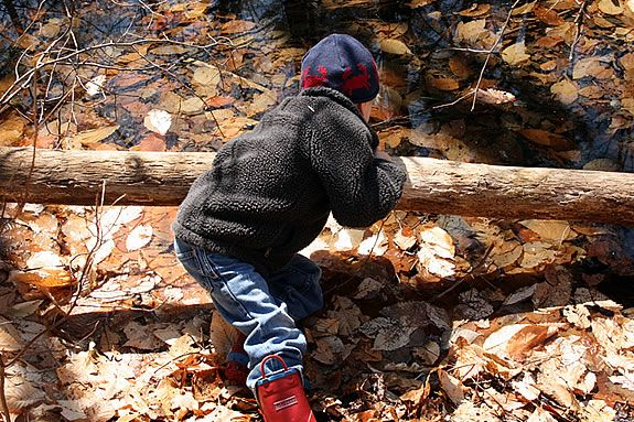 Kids will get a close-up look at creatures and bugs that live in IRWS wetlands.