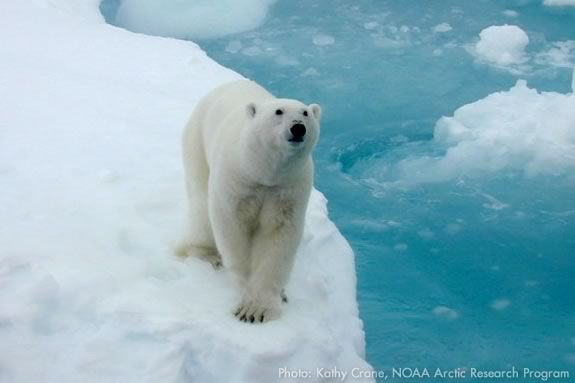 Come learn about the animals of the polar habitats at the Joppa Flats Center! Photo: Kathy Crane, NOAA Arctic Research Program