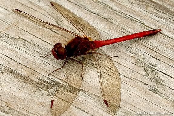 Kids will explore and learn about the winged creatures of IRWS for Spring break