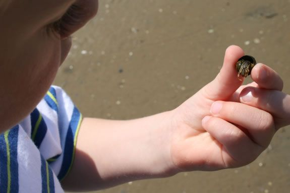 What lives in the tidal pools?  find out at Joppa Flats Education Center!